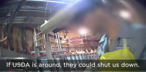 Screenshot of Compassion Over Killing video inside QPP plant.