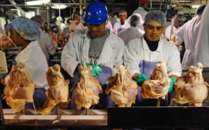 Meat and poultry workers face high rates of injury and often receive substandard medical care.